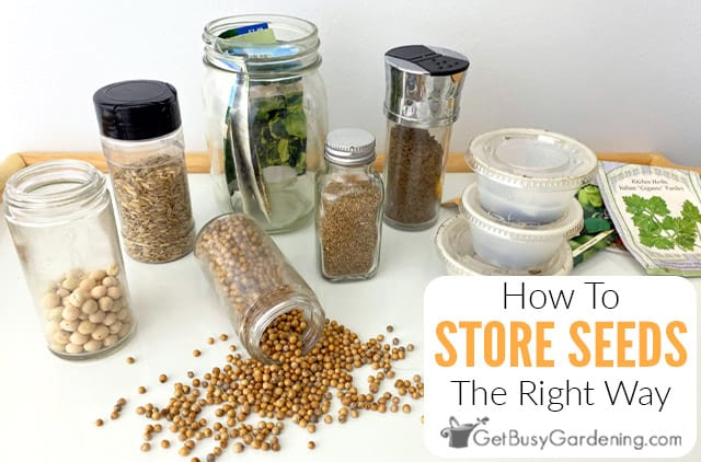 Storing Seeds The Right Way