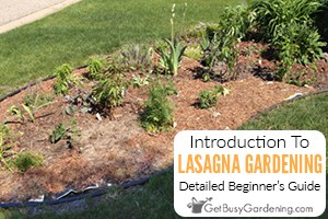 Lasagna Gardening 101: How To Make A Lasagna Gardenrdening: Detailed Beginner's Guide