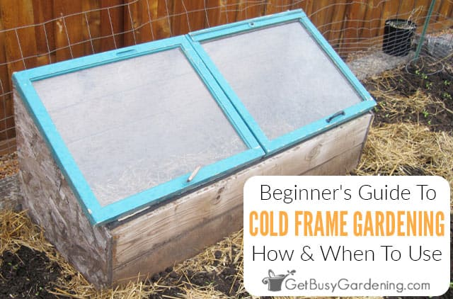 Beginner's Guide To Cold Frame Gardening
