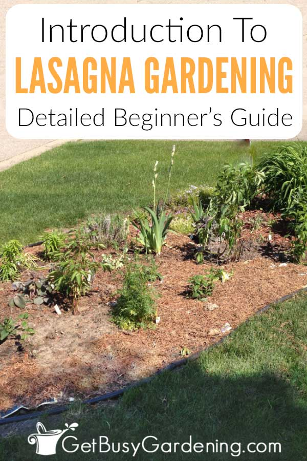 Introduction to Lasagna Gardening: Detailed Beginner's Guide