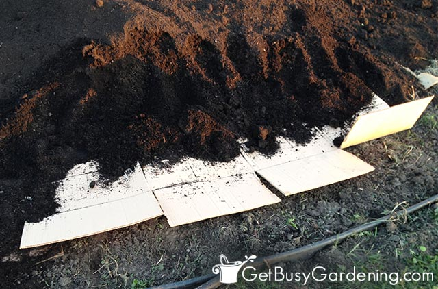 Layering my no dig garden bed with cardboard