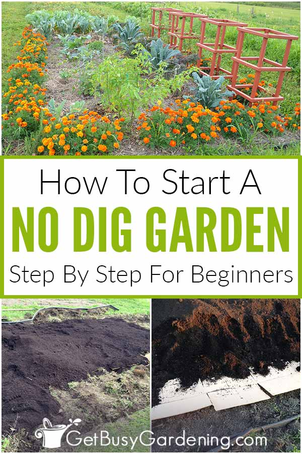 How To Start A No Dig Garden: Step By Step For Beginners