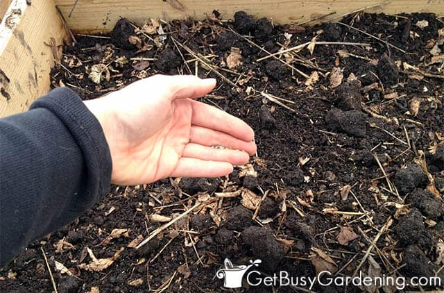 Direct sowing lettuce in my garden