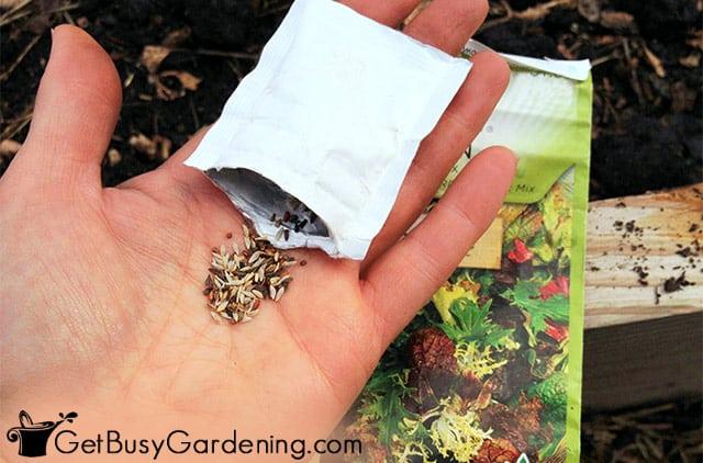 Preparing to plant my lettuce seeds