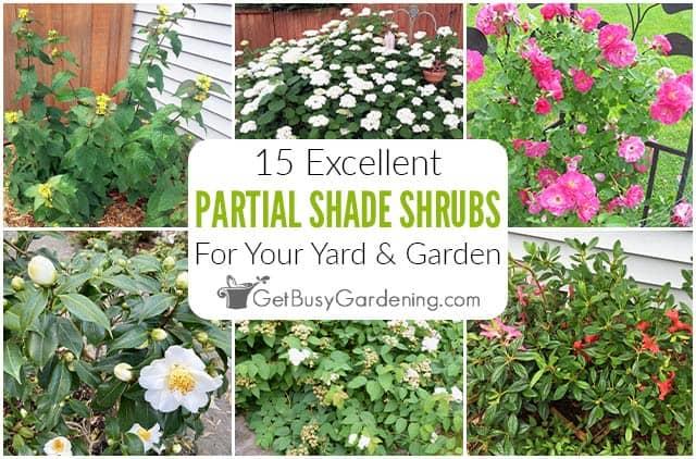 15 Shrubs For Partial Shade In Your Garden