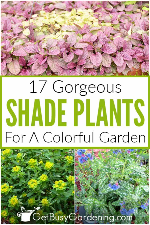 17 Gorgeous Shade Plants For A Colorful Garden