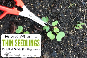 How & When To Thin Seedlings & Plants (Everything You Need To Know)