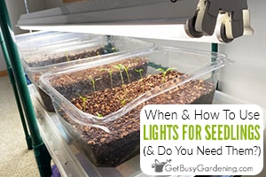 Lighting For Seedlings: When To Put Seedlings Under Light & How Much
