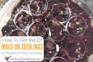 How To Get Rid Of Mold Growth On Germinating Seeds, Seedlings & Seed Starter Pots