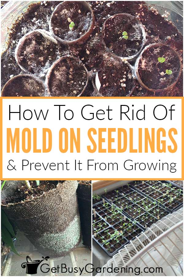 How To Get Rid Of Mold On Seedlings & Prevent It From Growing
