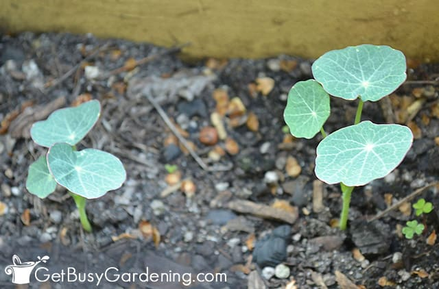 Baby seedlings in my garden