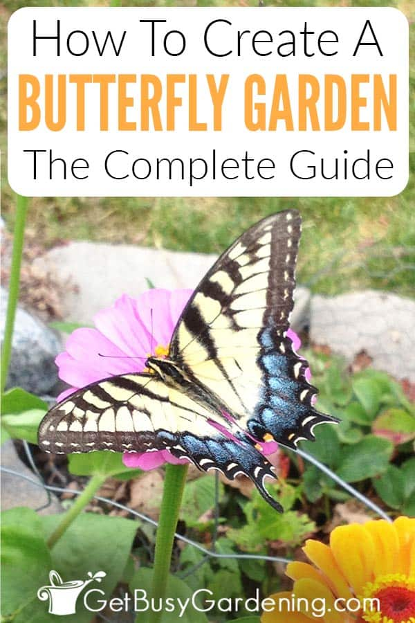 How To Create A Butterfly Garden: The Complete Guide