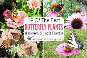 19 Host Plants & Flowers For Butterflies
