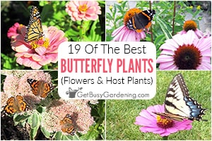 19 Host Plants & Flowers For Butterflies