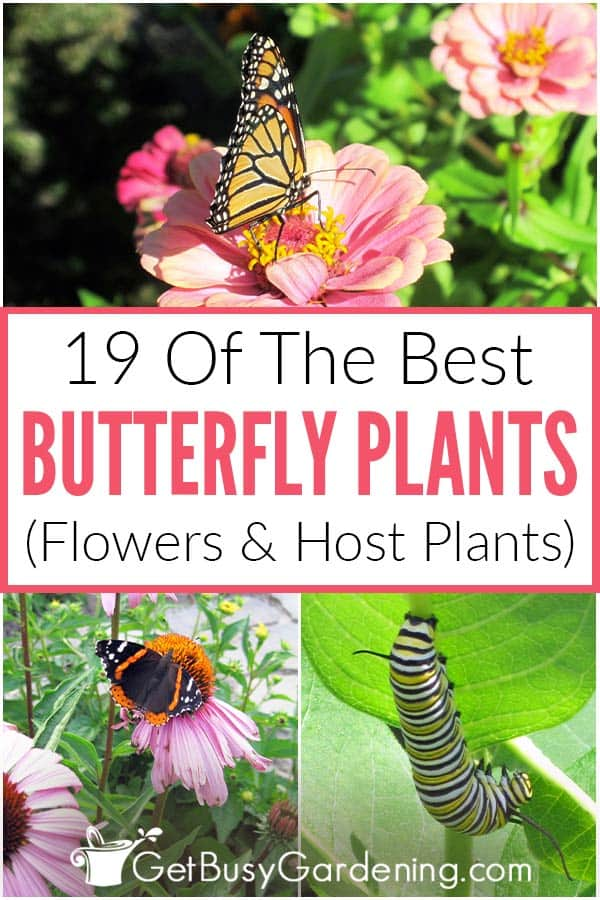 19 Of The Best Butterfly Plants (Flowers & Host Plants)