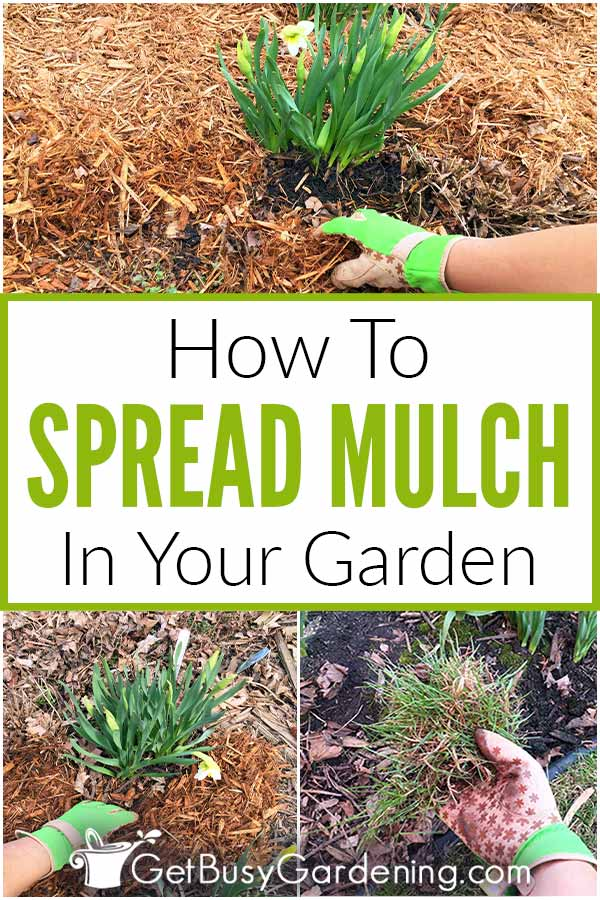 How To Spread Mulch In Your Garden
