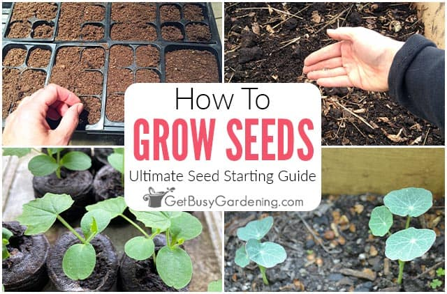How To Grow Seeds: The Ultimate Seed Starting Guide