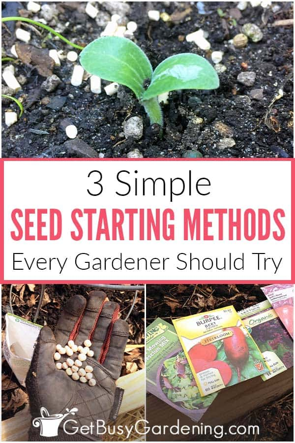 3 Simple Seed Starting Methods Every Gardener Should Try