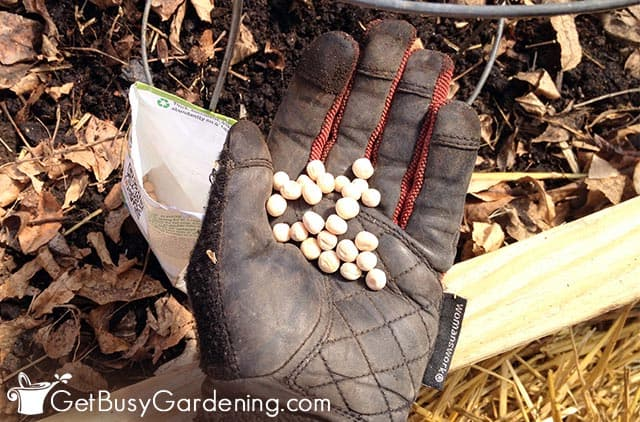 Starting seeds with the direct sowing method