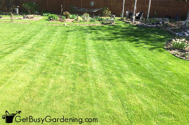 Beautiful straight lines mowed in the grass
