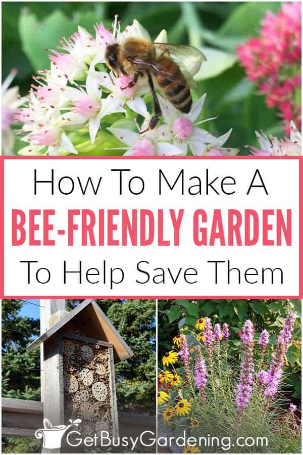 How To Make A Bee-Friendly Garden To Help Save Them