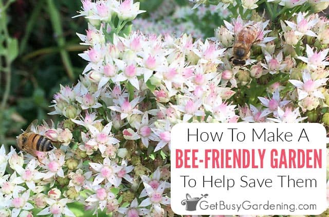 Create A Bee Friendly Garden To Help Save The Bees