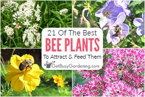 21 Of The Best Plants For Attracting Bees