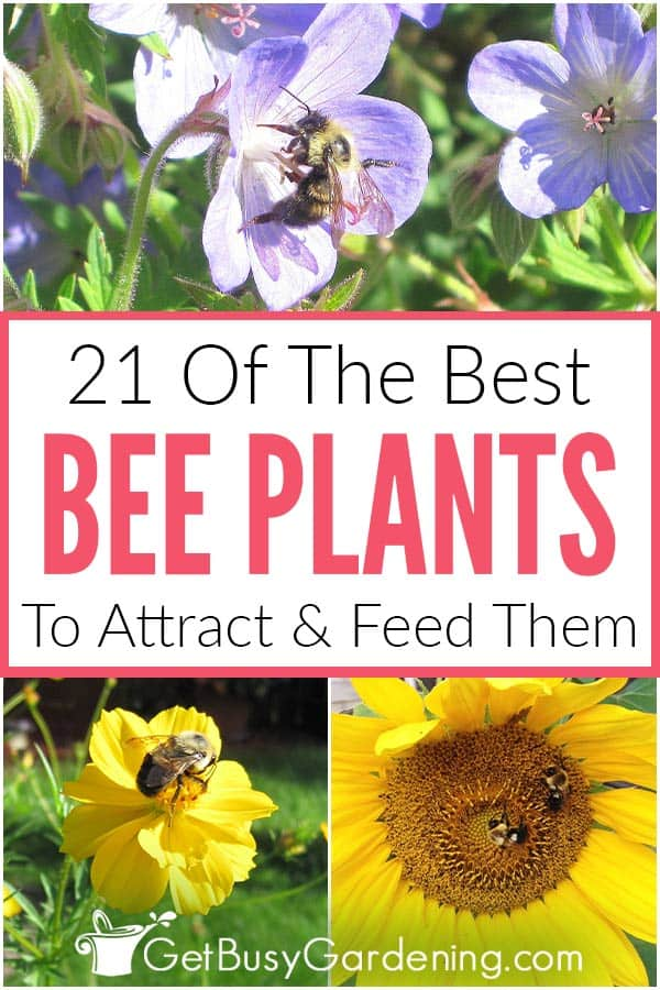 21 Of The Best Bee Plants To Attract & Feed Them