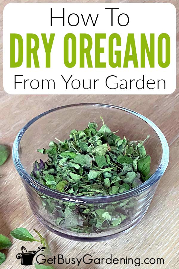 How To Dry Oregano From Your Garden