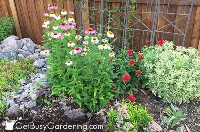 Lovely flower garden for bees