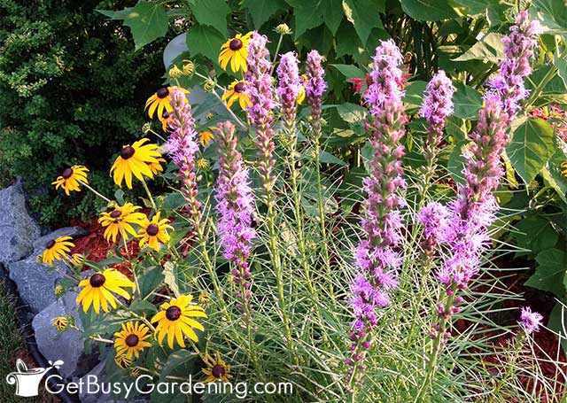 Native plants for the bees in my garden