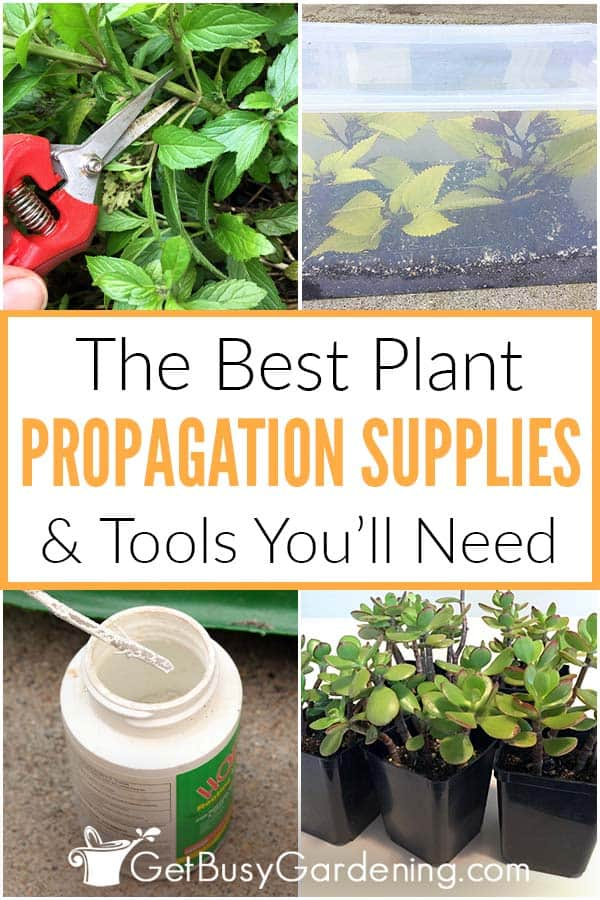 The Best Plant Propagation Supplies & Tools You'll Need