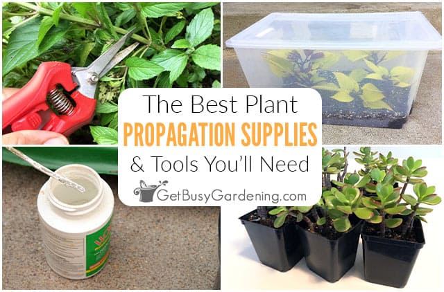 The Best Plant Propagation Tools, Equipment & Supplies