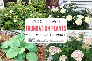 21 Best Foundation Plants For The Front Of Your House