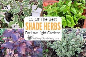15 Herbs To Grow In Your Shade Garden