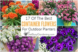 17 Top Container Garden Flowers For Stunning Summer Pots