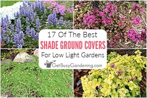 17 Best Ground Cover Plants That Grow Well In The Shade